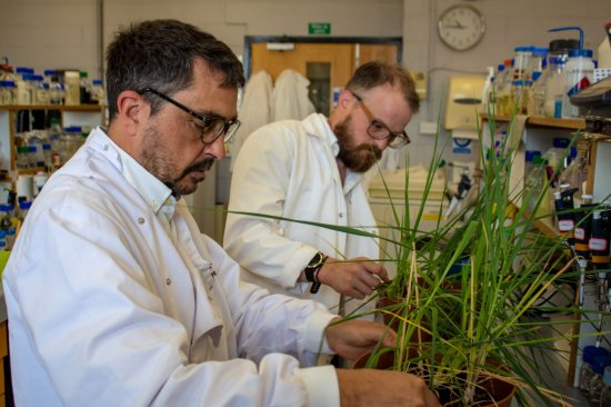 Dr Peter Morris (L) and Dr Ross Alexander (R) examine barley plants in the lab